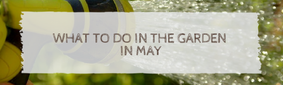 What to do in the garden in May