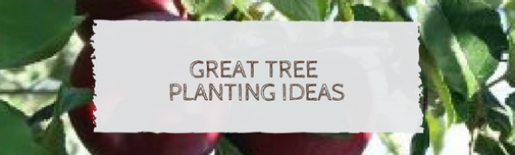 Great tree planting ideas