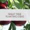 Great tree planting ideas