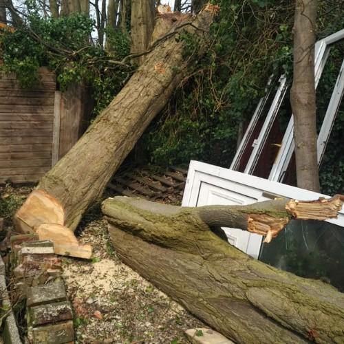 chopping up a fallen tree