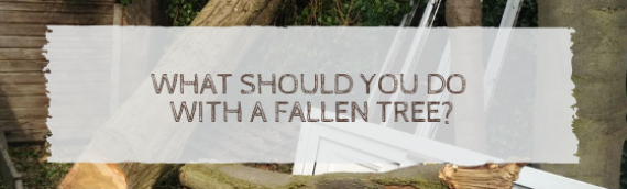 What should you do with a fallen tree?