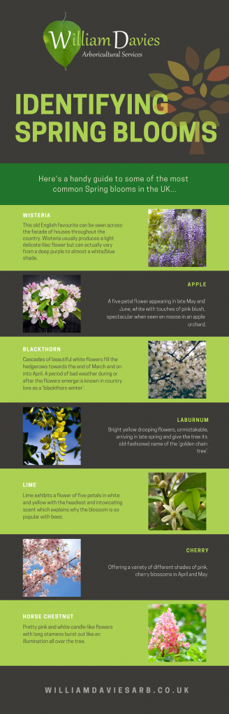 spring blooms infographic